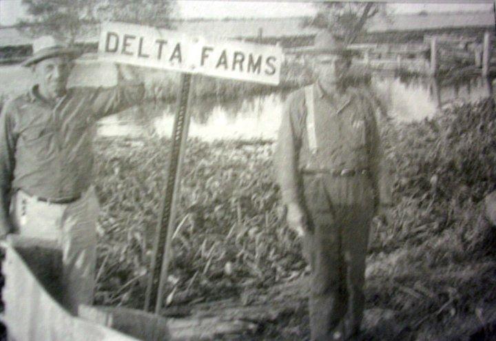 Delta Farms, Louisiana - Wikipedia