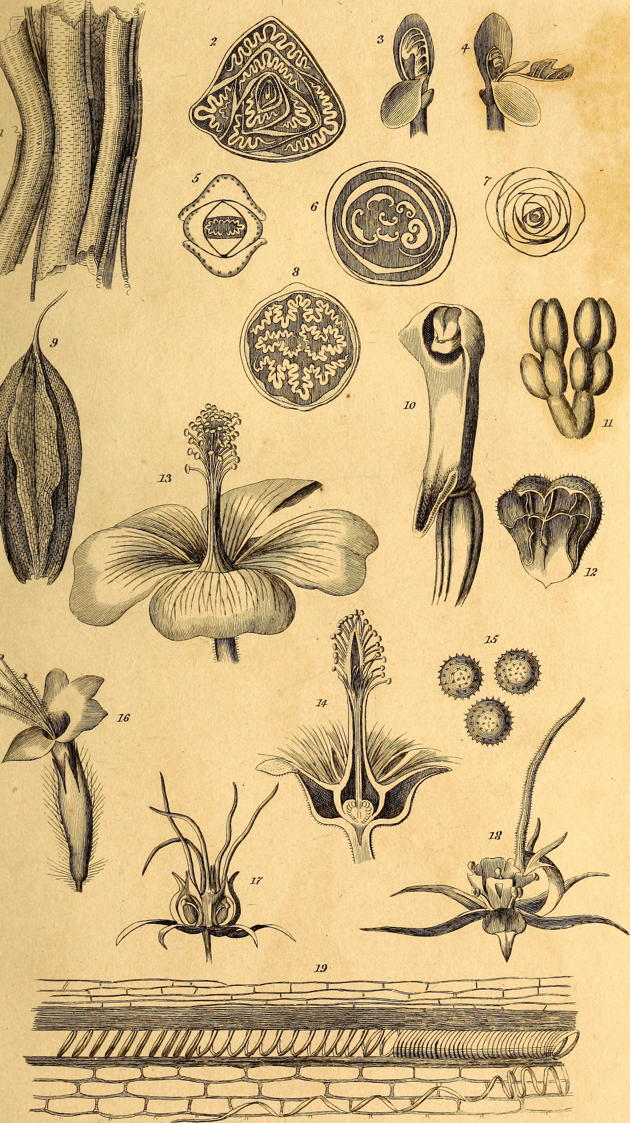 File:Elements of the philosophy of plants - containing the ...