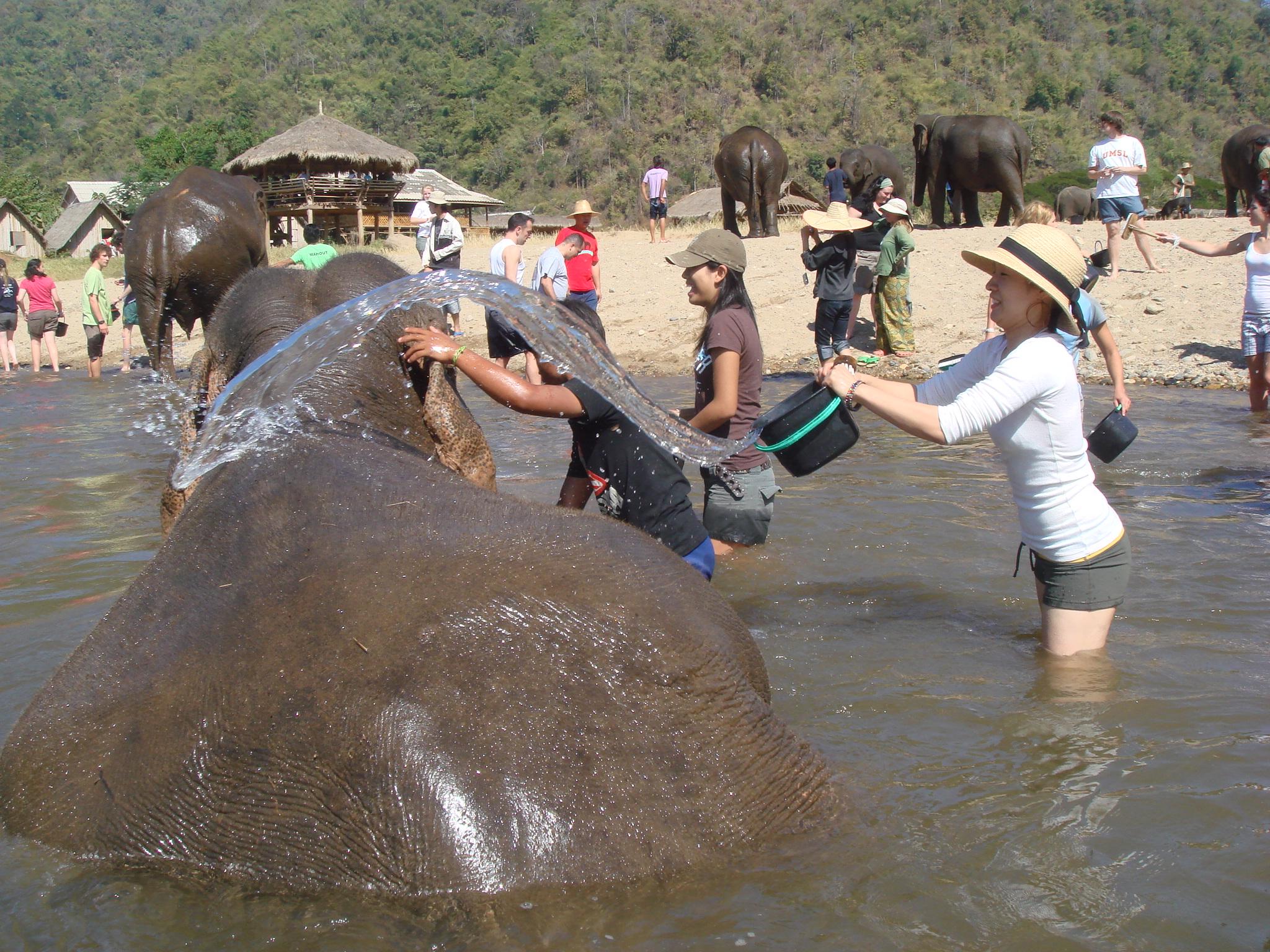 File:Elephant nature park.JPG - Wikipedia