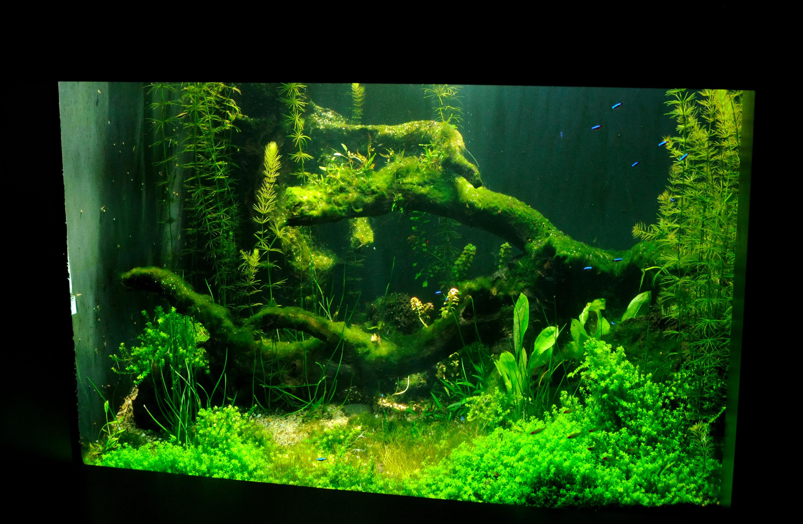 File Fish Tank Honolulu Aquarium Wikimedia mons