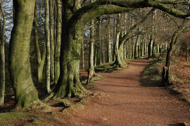 Footpath through trees, Clent Hills - geograph.org.uk - 672215