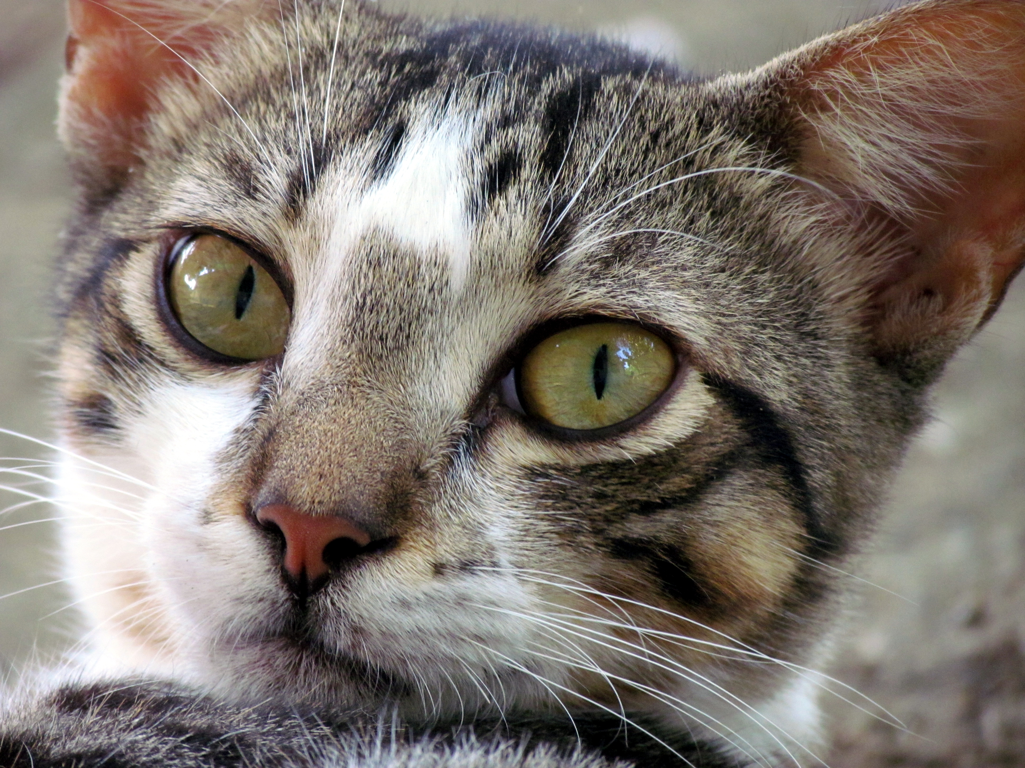 4 gato com: