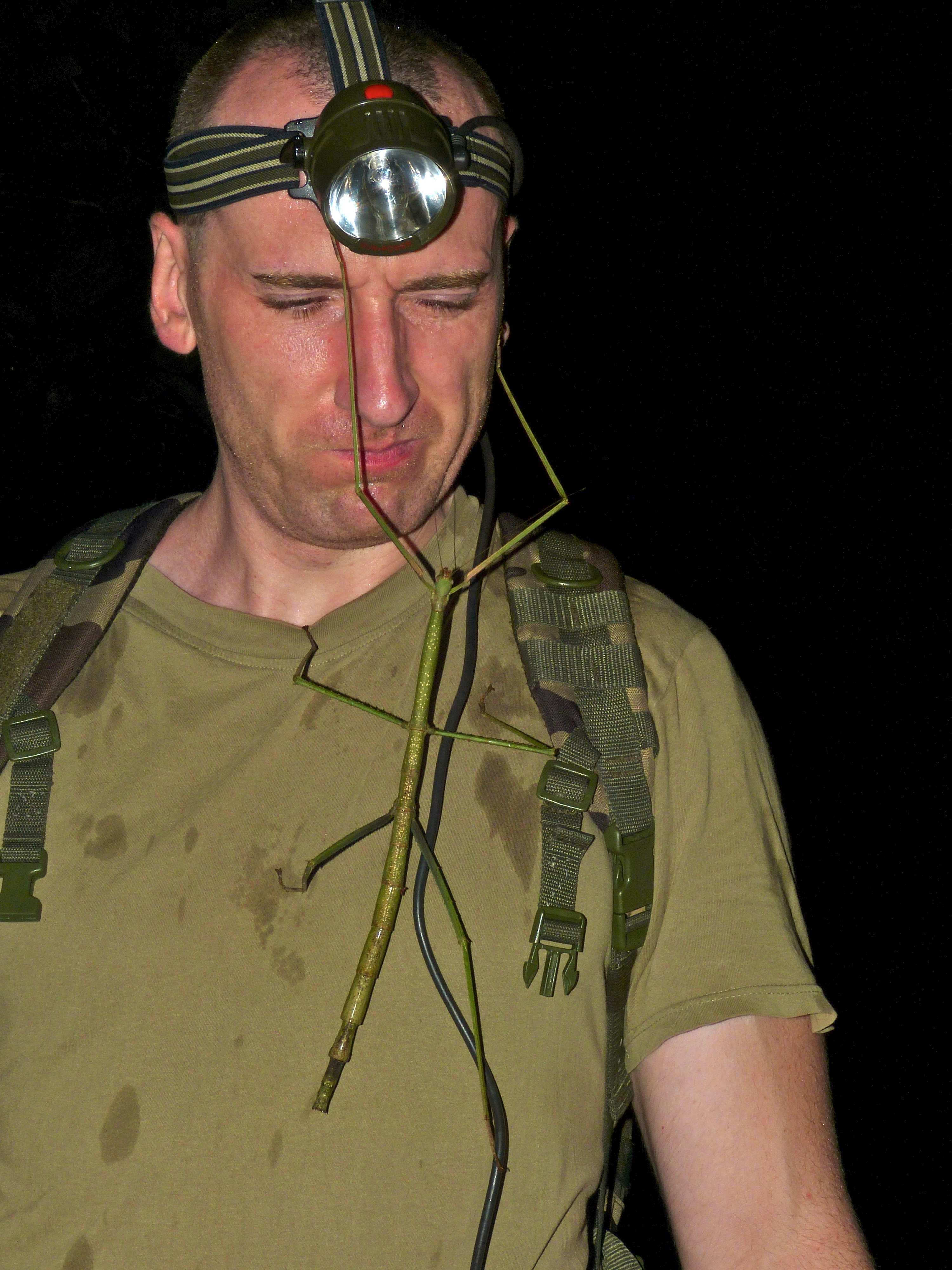 https://upload.wikimedia.org/wikipedia/commons/6/62/Giant_Stick_Insect_%28Phobaeticus_serratipes%29_on_Sylvain_%288727651923%29.jpg