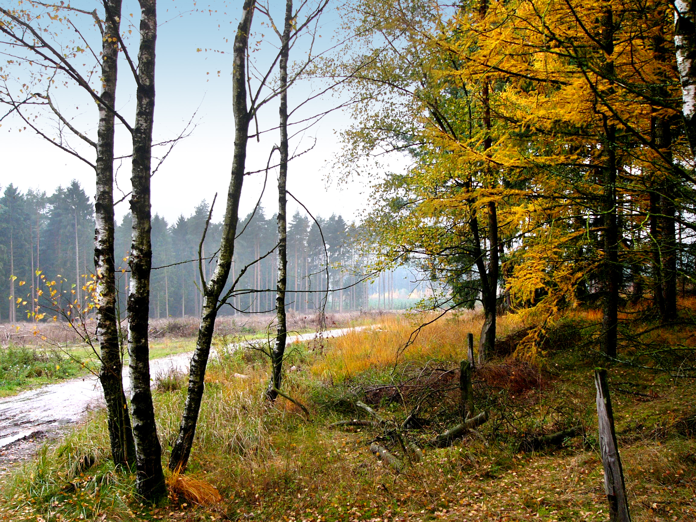 FileHerbst im Teutoburger Wald 01jpg  Wikimedia Commons