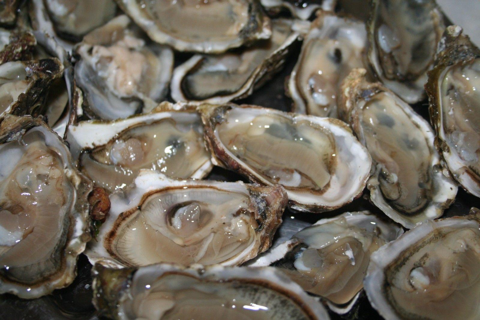 """La production d'huîtres """"4 saisons"""" booste les exploitations ..."""