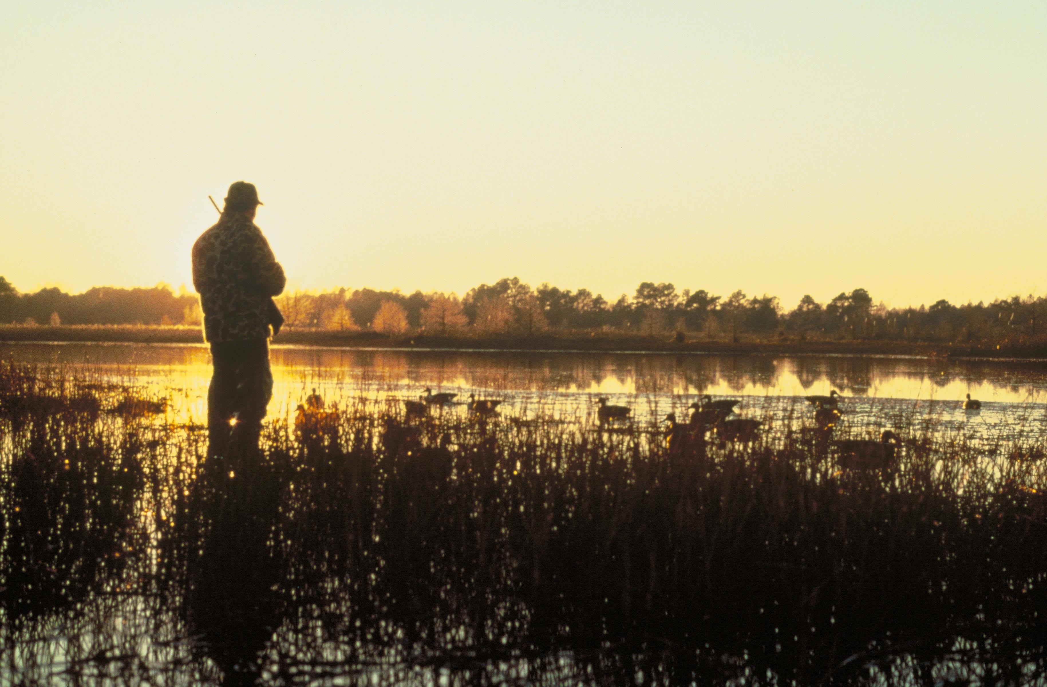Lov na slikama i videu - Page 14 Hunting_at_sunset