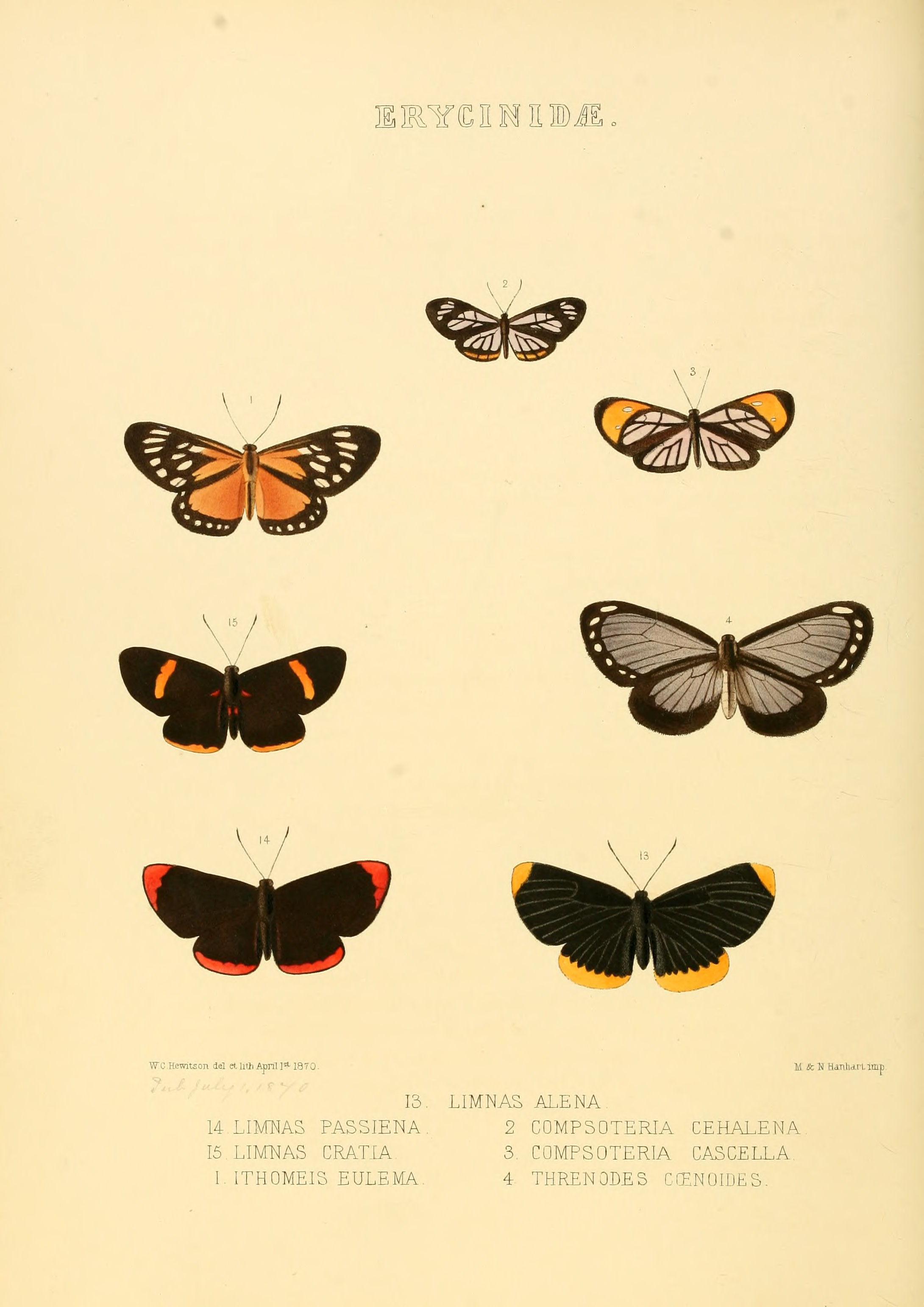 File:Illustrations of new species of exotic butterflies ...