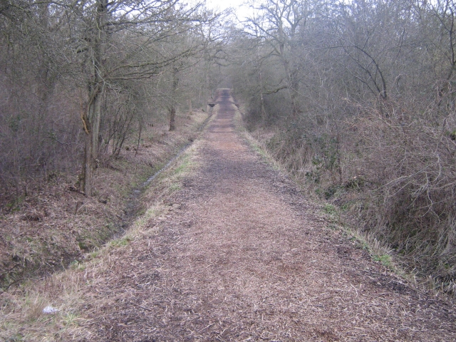 Into the trees - geograph.org.uk - 1226480