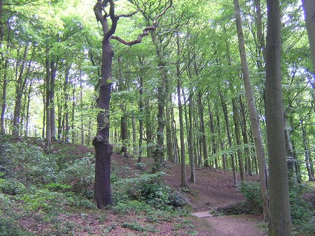 Jerrison Wood, Esholt - geograph.org.uk - 13393