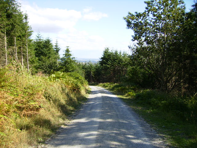 Leaving Shobdon Hill Wood on the Mortimer Trail - geograph.org.uk - 219757