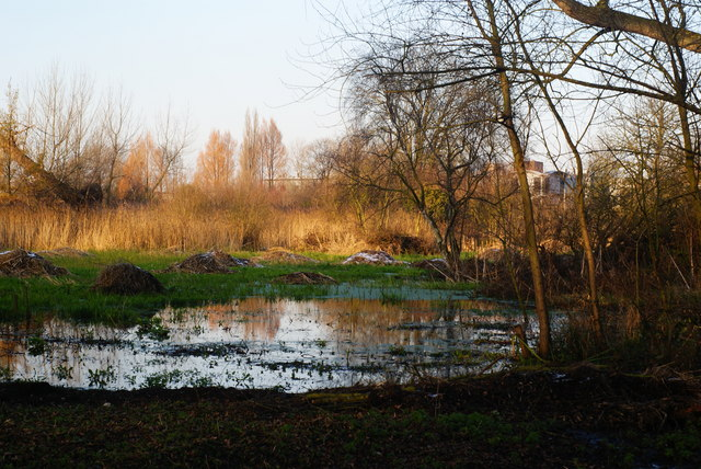 Morden Hall Park - wetlands - geograph.org.uk - 1629335