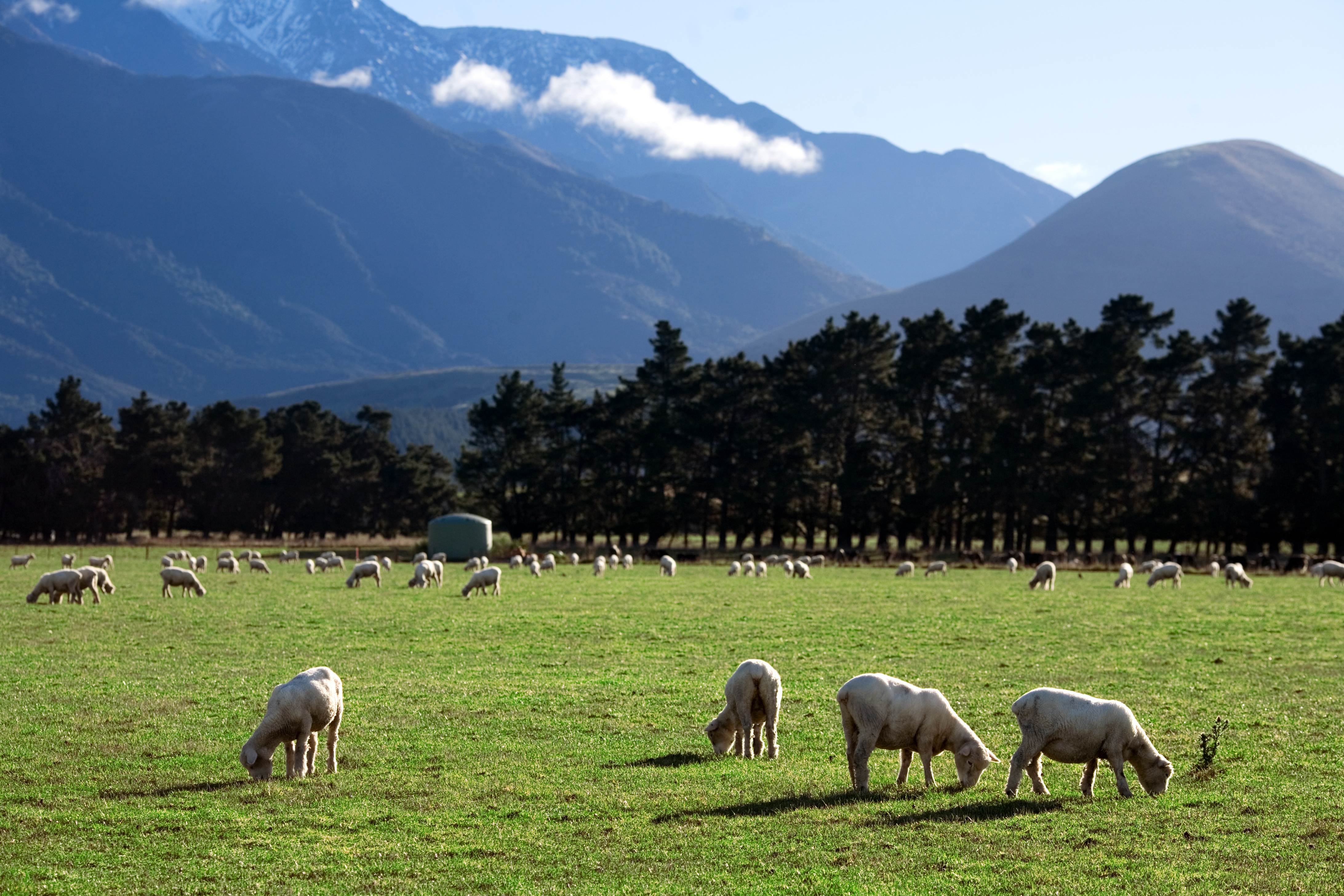 File:New Zealand - Rural