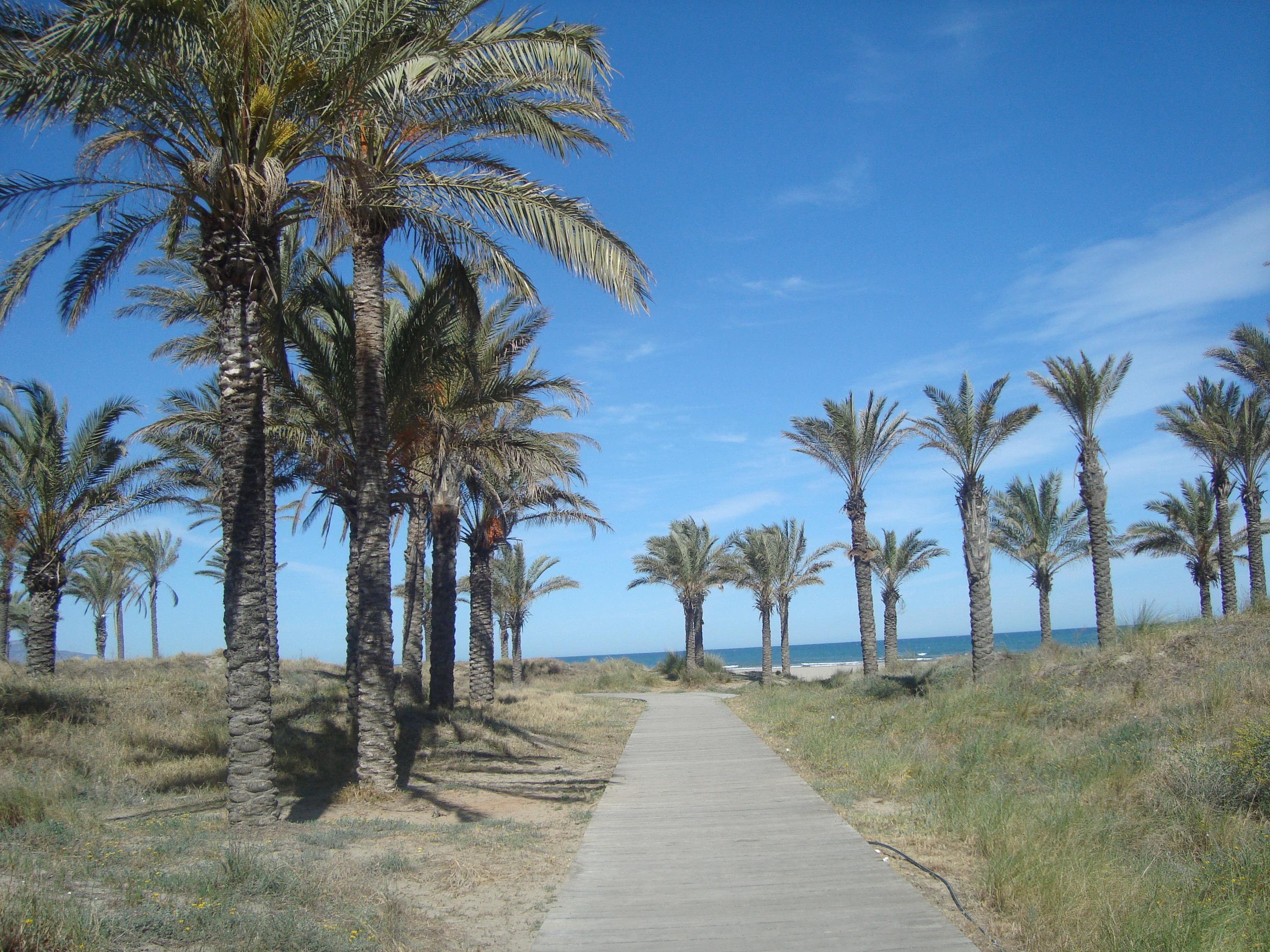 File Playa Del Palmeral O Del Pinar Castellón De La Plana Jpg Wikimedia Commons