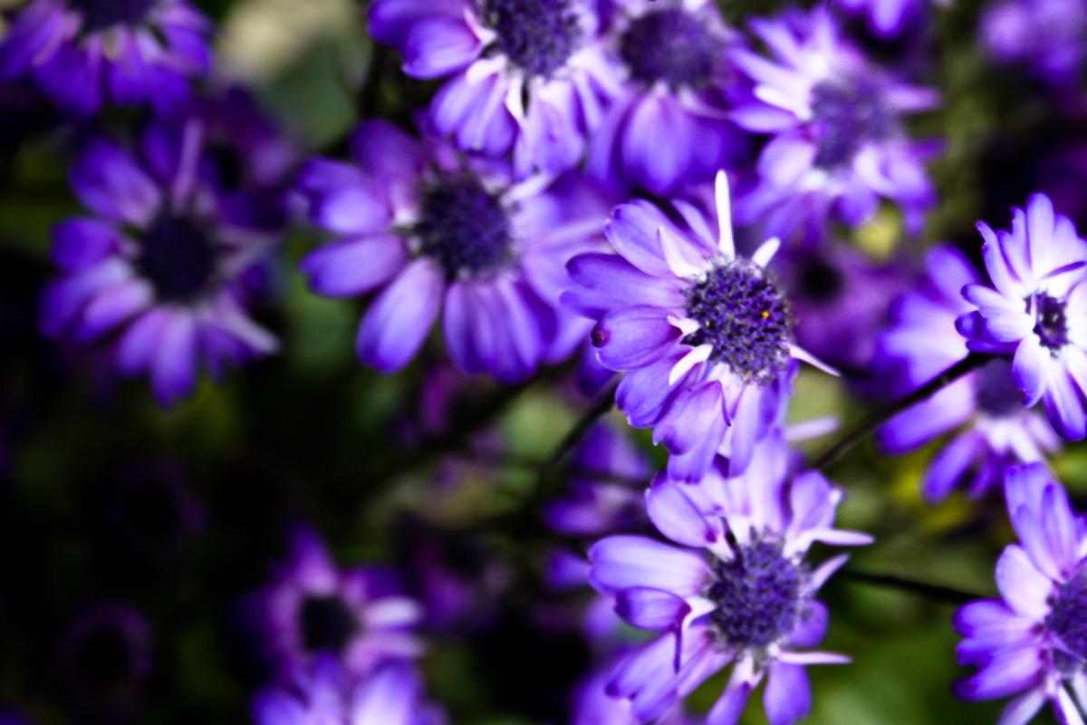 Purple Flower Girl Shoes Uk