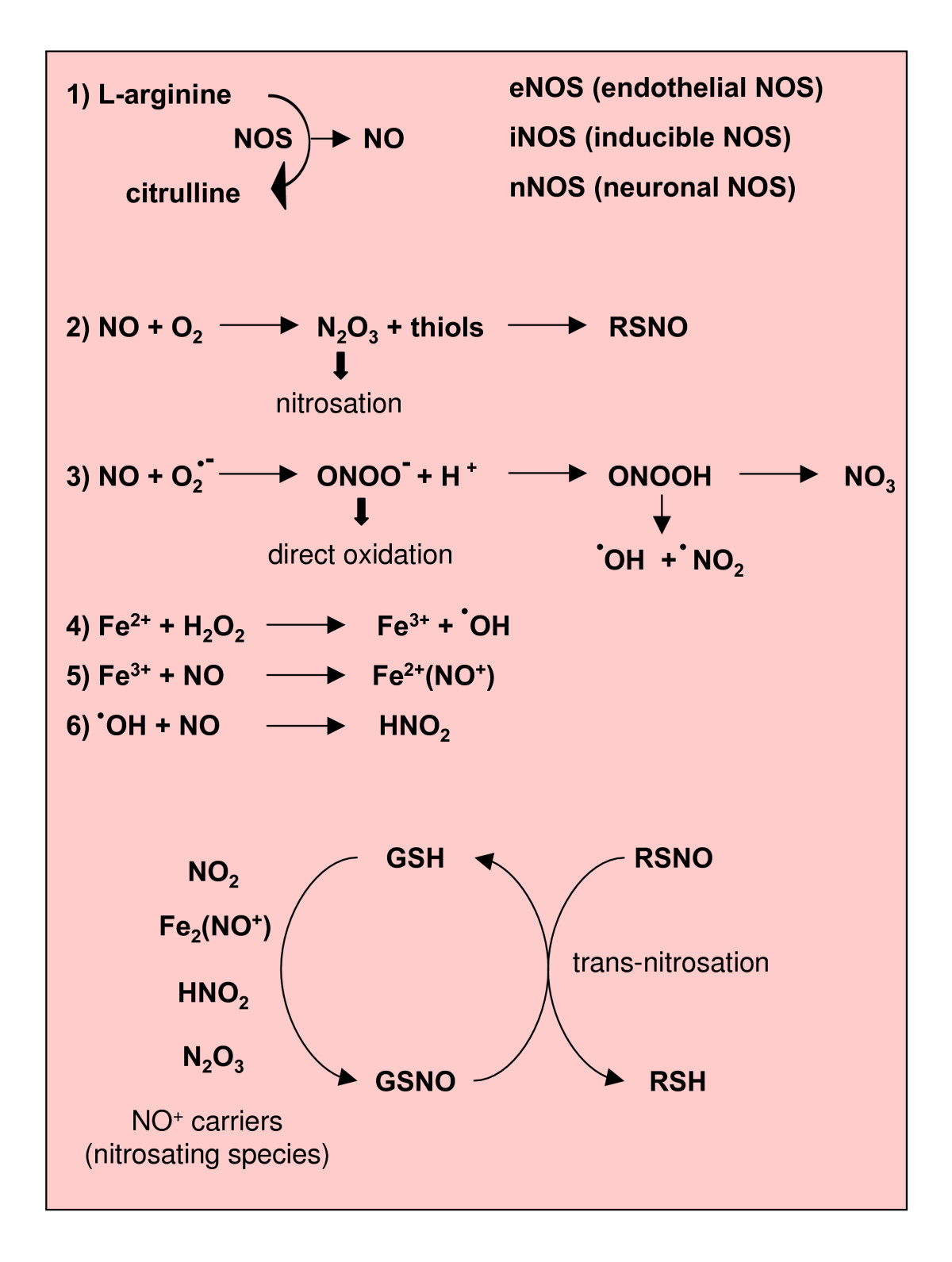 reactive nitrogen species - wikipedia