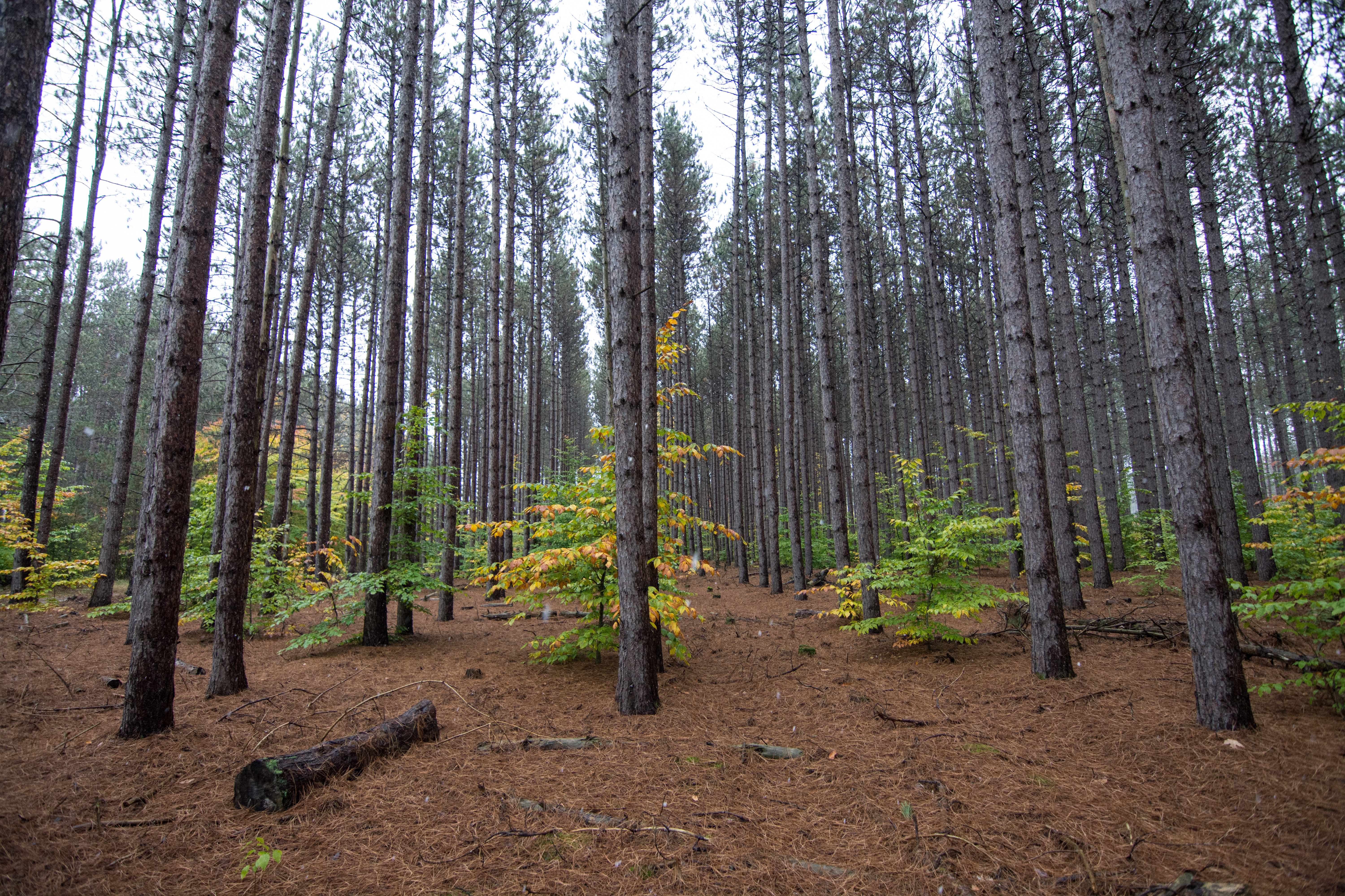 Manistee National Forest - Wikipedia