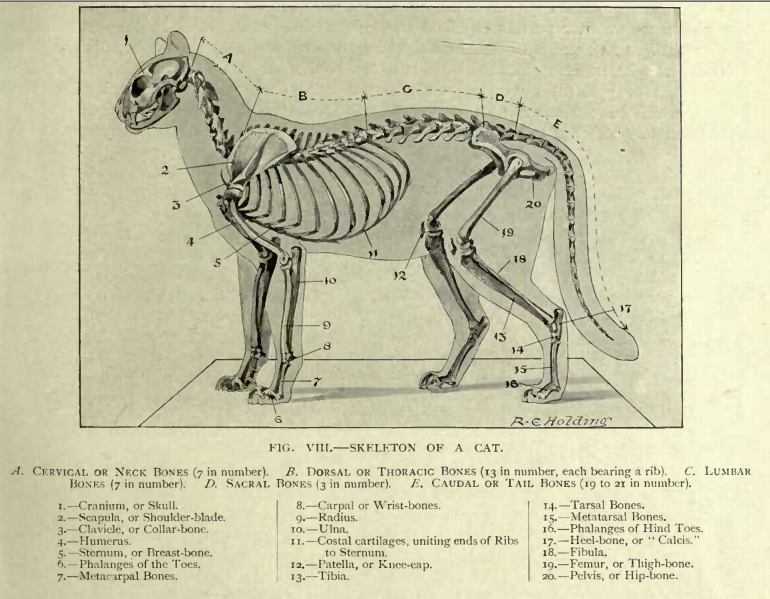 google image result for http://www.akfentertainment/akfpic, Skeleton
