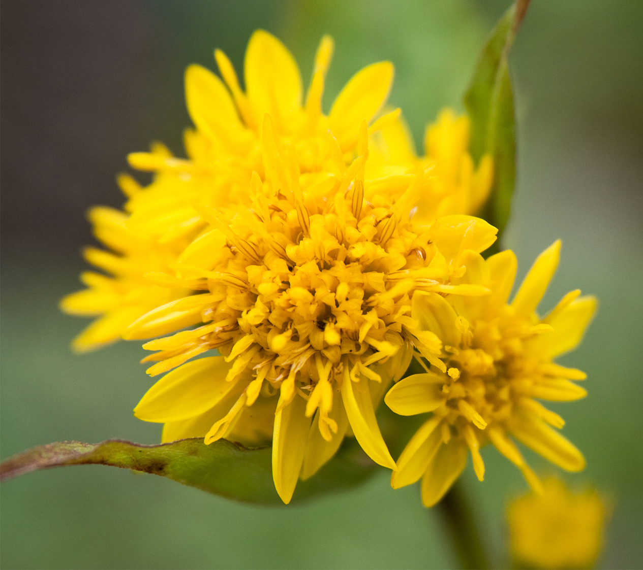 Yellow Flower Names With  Letters