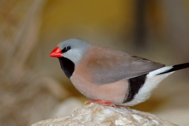 Las aves mas exoticas