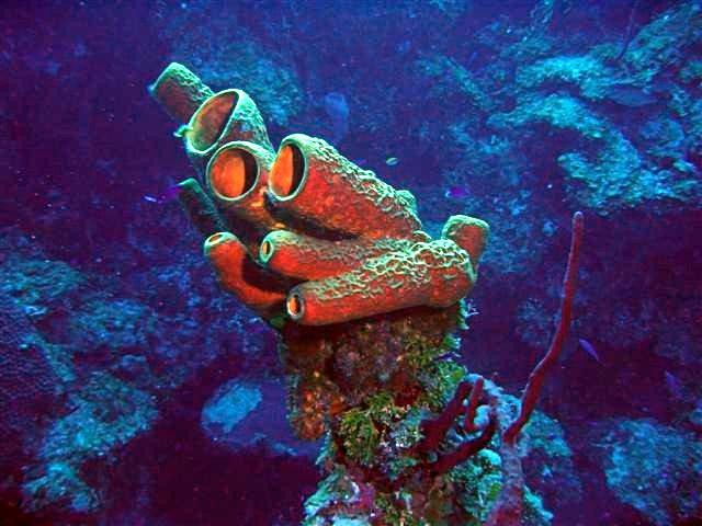 File:SpongeColorCorrect.jpg