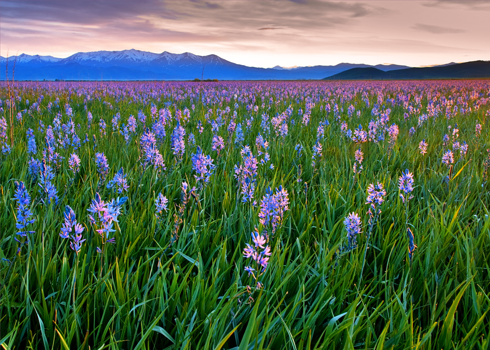 Camas Prairie Centennial Marsh Wildlife Management Area - Wikipedia