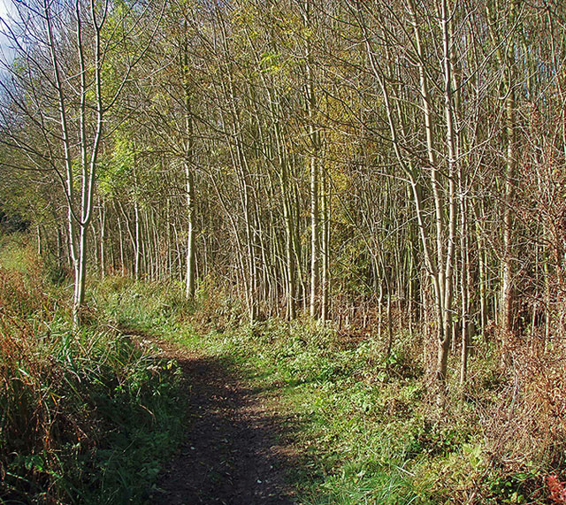 The Thames Path and riverside woodland - geograph.org.uk - 610987