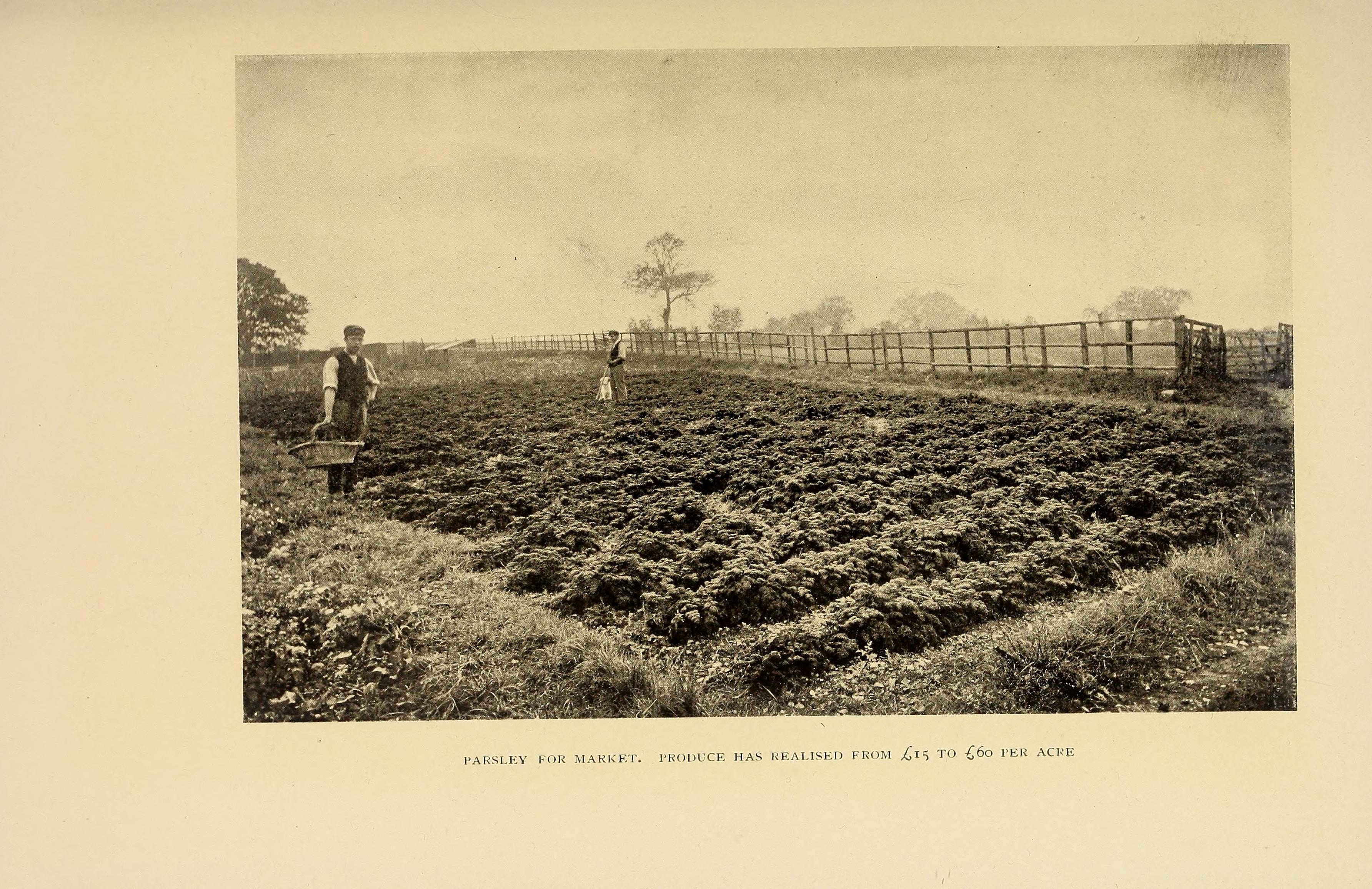 File:The book of market gardening (1906) (20390186002).jpg ...
