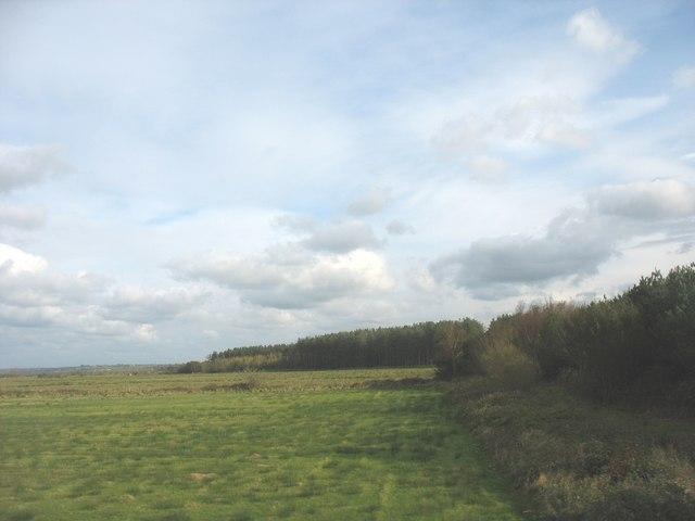 The northern edge of the Newborough Forest - geograph.org.uk - 1031547