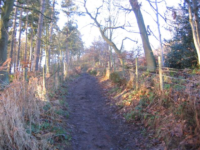 The woodland path to the summit. - geograph.org.uk - 101112