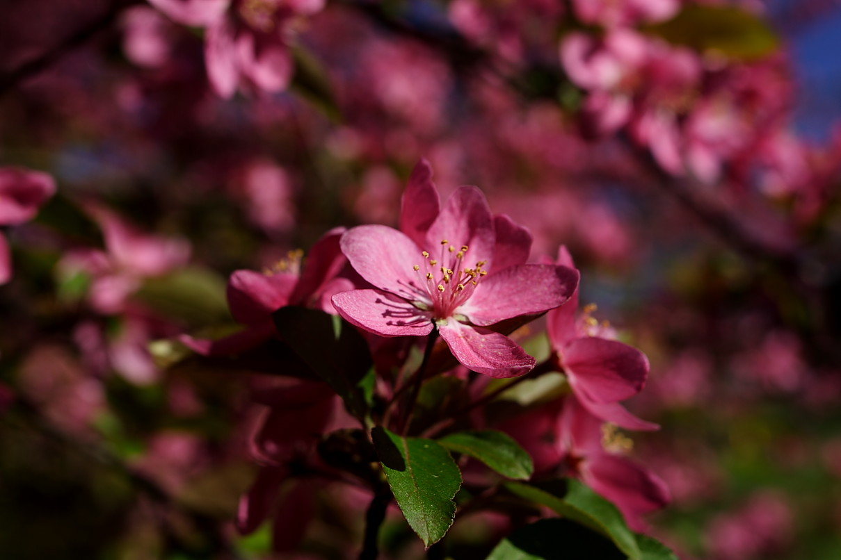 pink spring flowers - photo #21