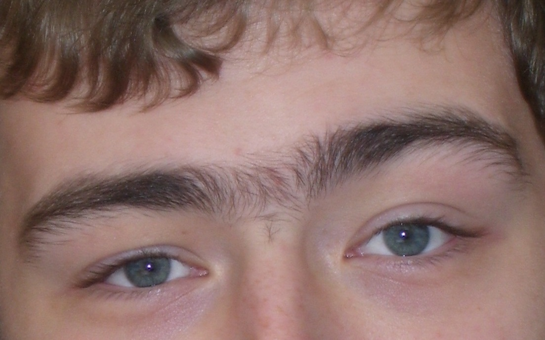 File Unibrow Jpg Wikimedia Commons