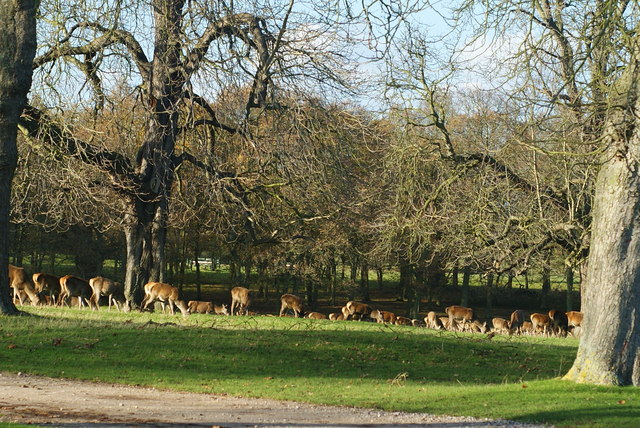 Windsor Great Park - geograph.org.uk - 1602378