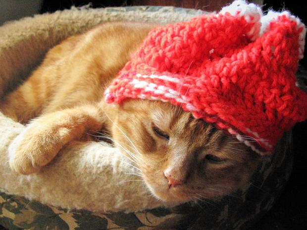 1461619 Cat-in-a-Knit-Hat 620