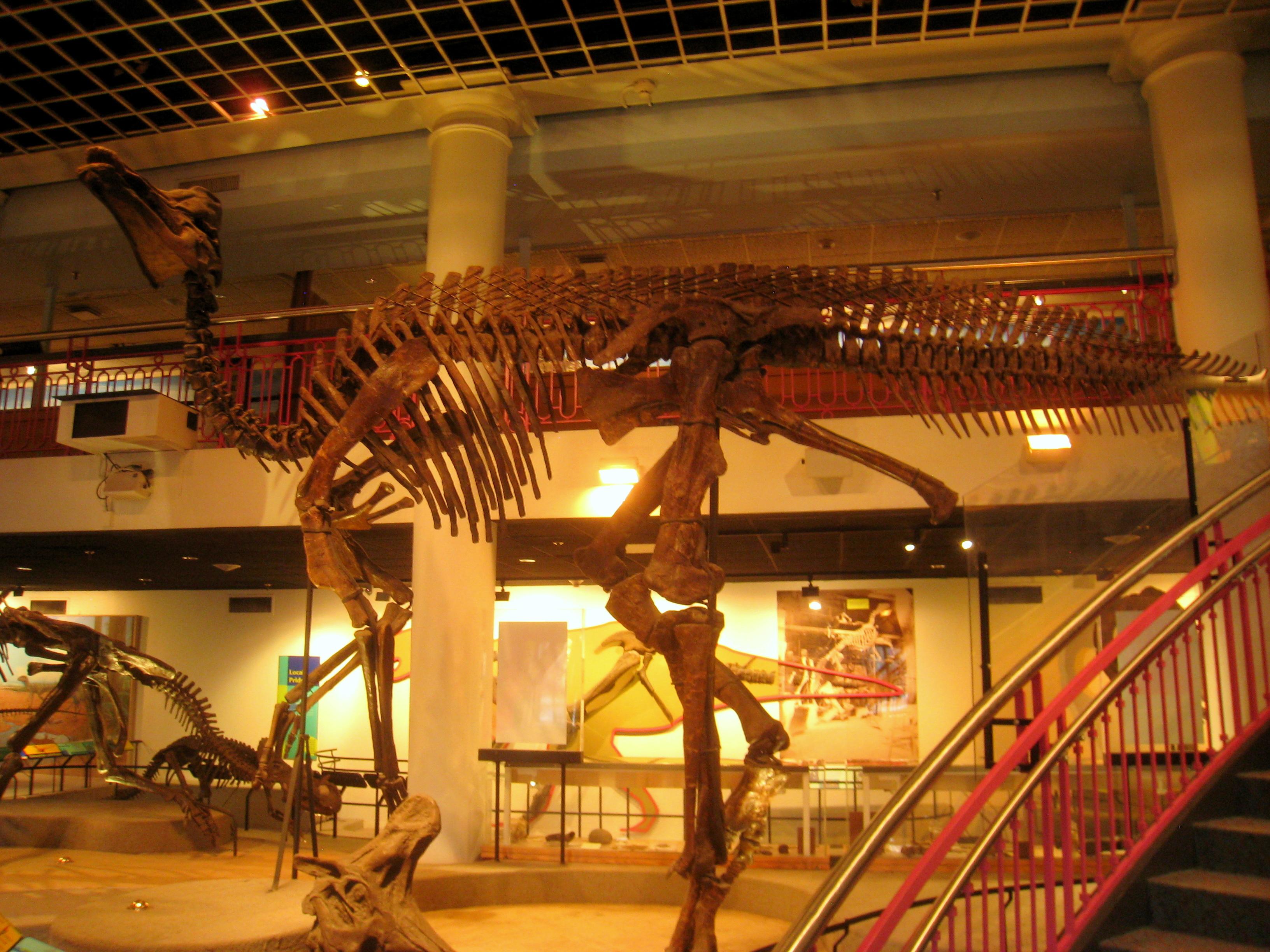 Museum Of Natural History Philadelphia Pennsylvania
