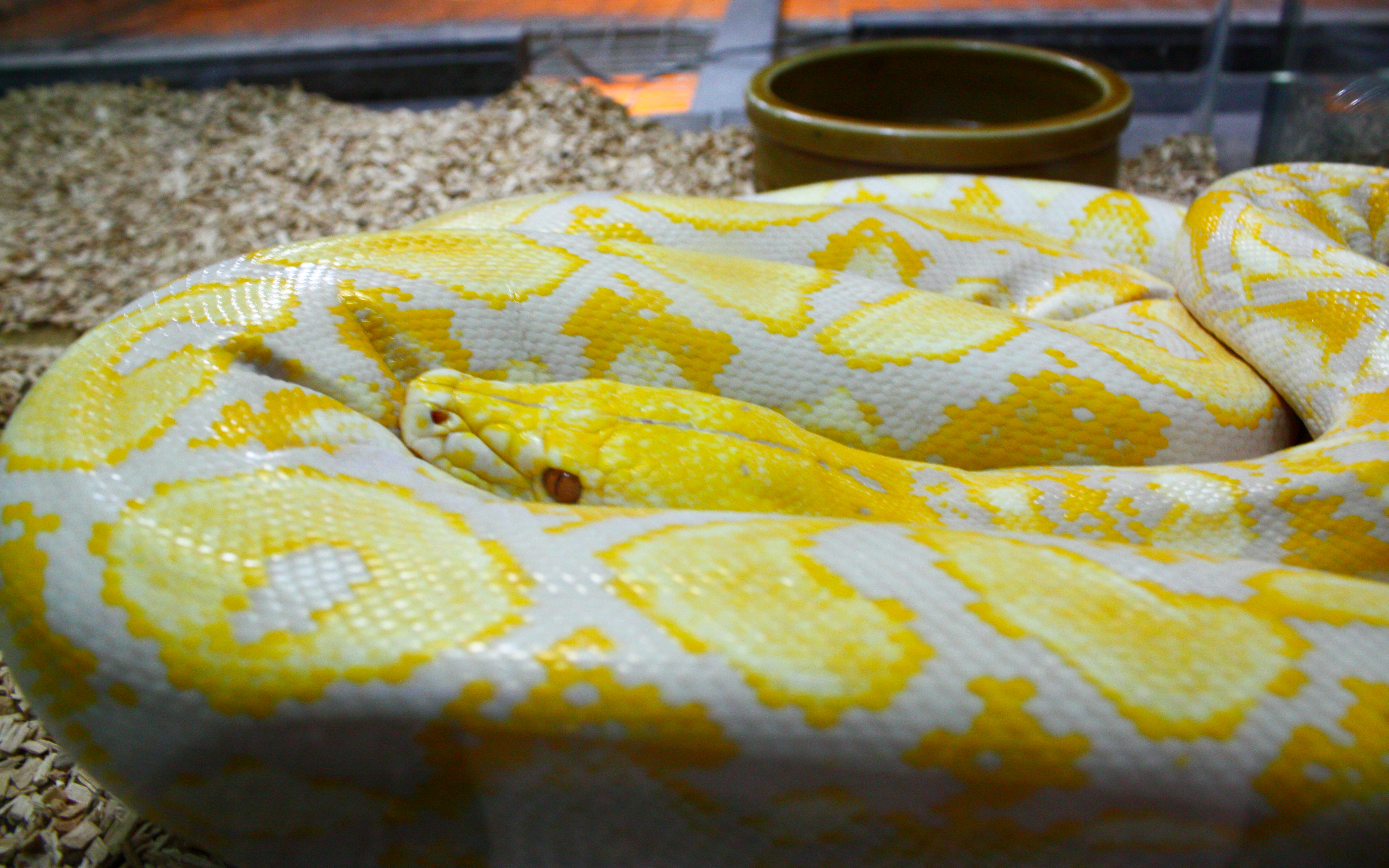 Yellow And White Python Cake