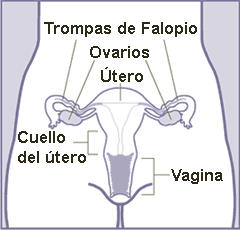 Trompa uterina