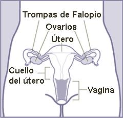 Trompas de falopio definicion yahoo dating