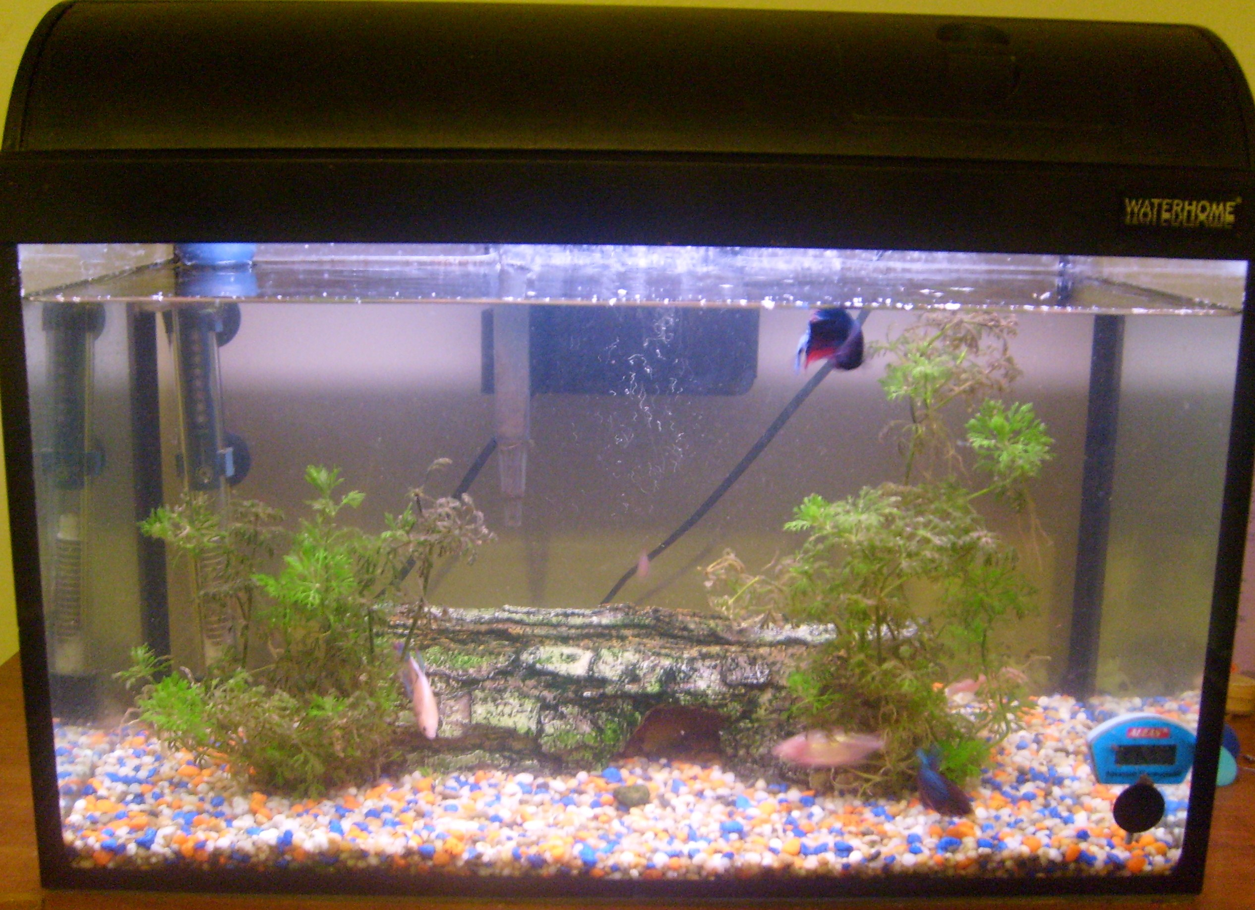 alt=Photo of water-filled glass tank containing with two green plants and pebbles on the bottom.