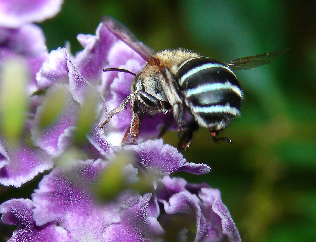 By Nature Bee Venom Face Cream Reviews
