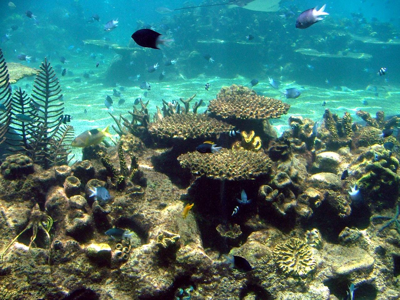 Coral Sea Australia