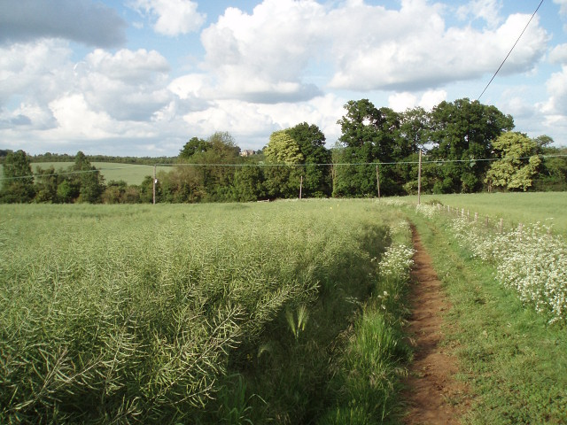 Bridleway down to Lower Grove Mill - geograph.org.uk - 451284