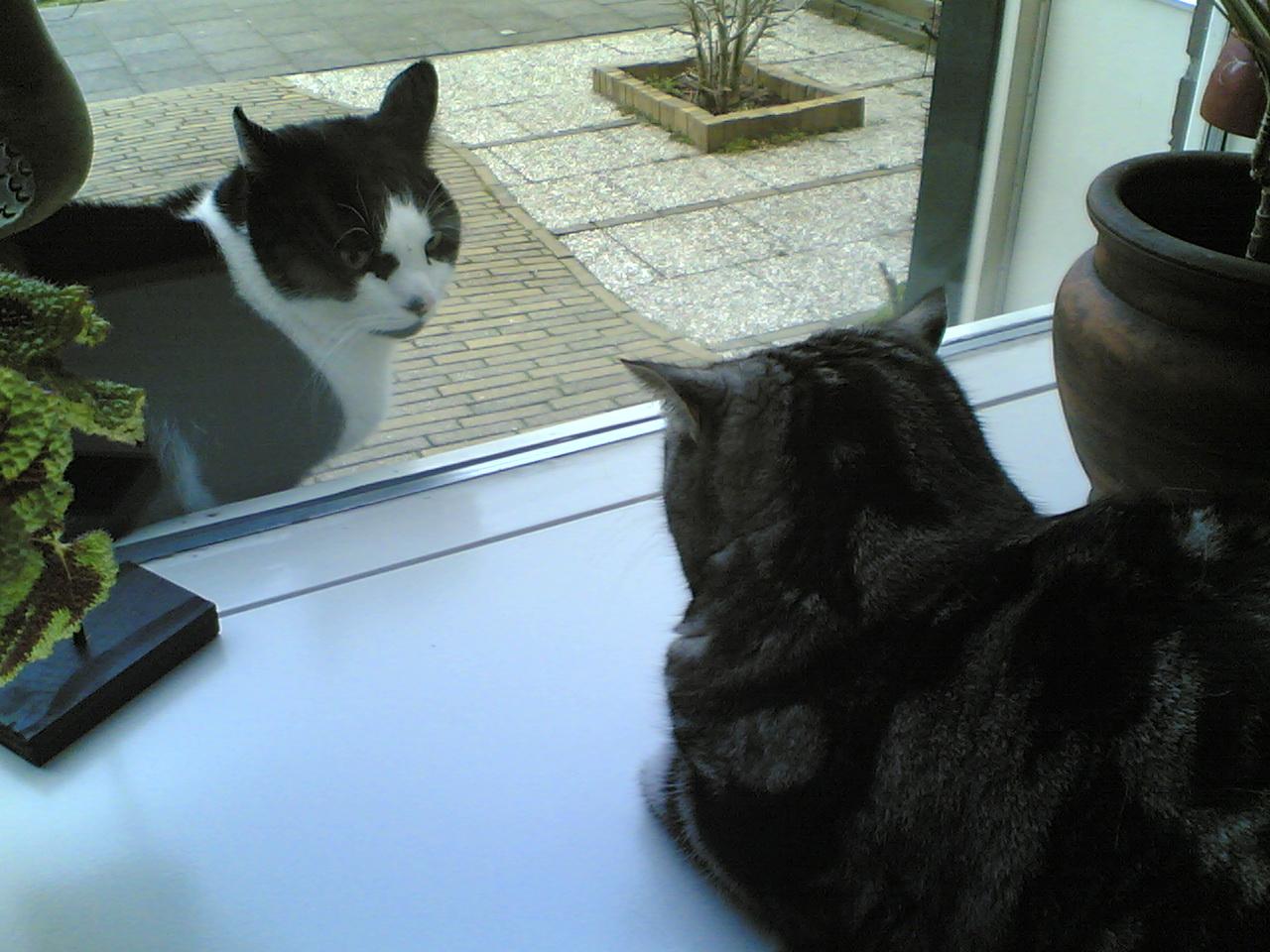 b030a1fcdd Cat communication - Wikipedia