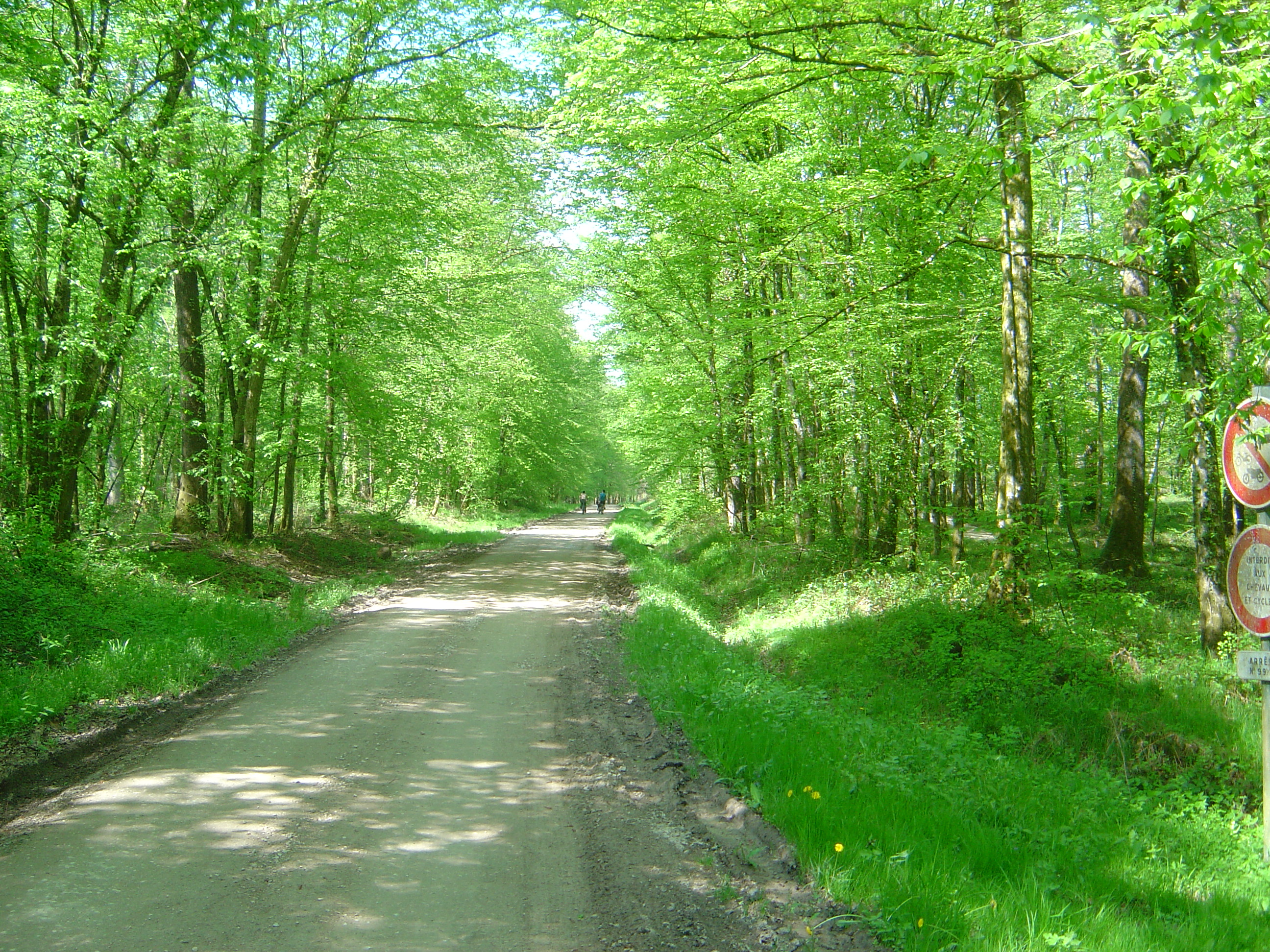 File:Chemin forêt Vy lès Lure.JPG - Wikimedia Commons
