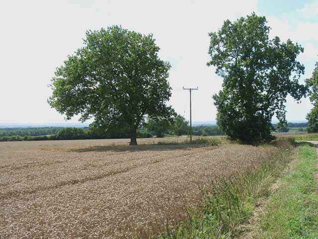 Cornfield, Blansby Park, near Pickering - geograph.org.uk - 217837