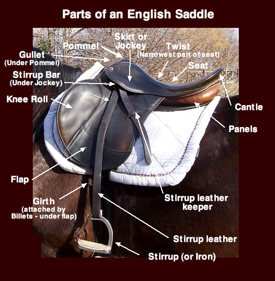 Diagram of an English saddle