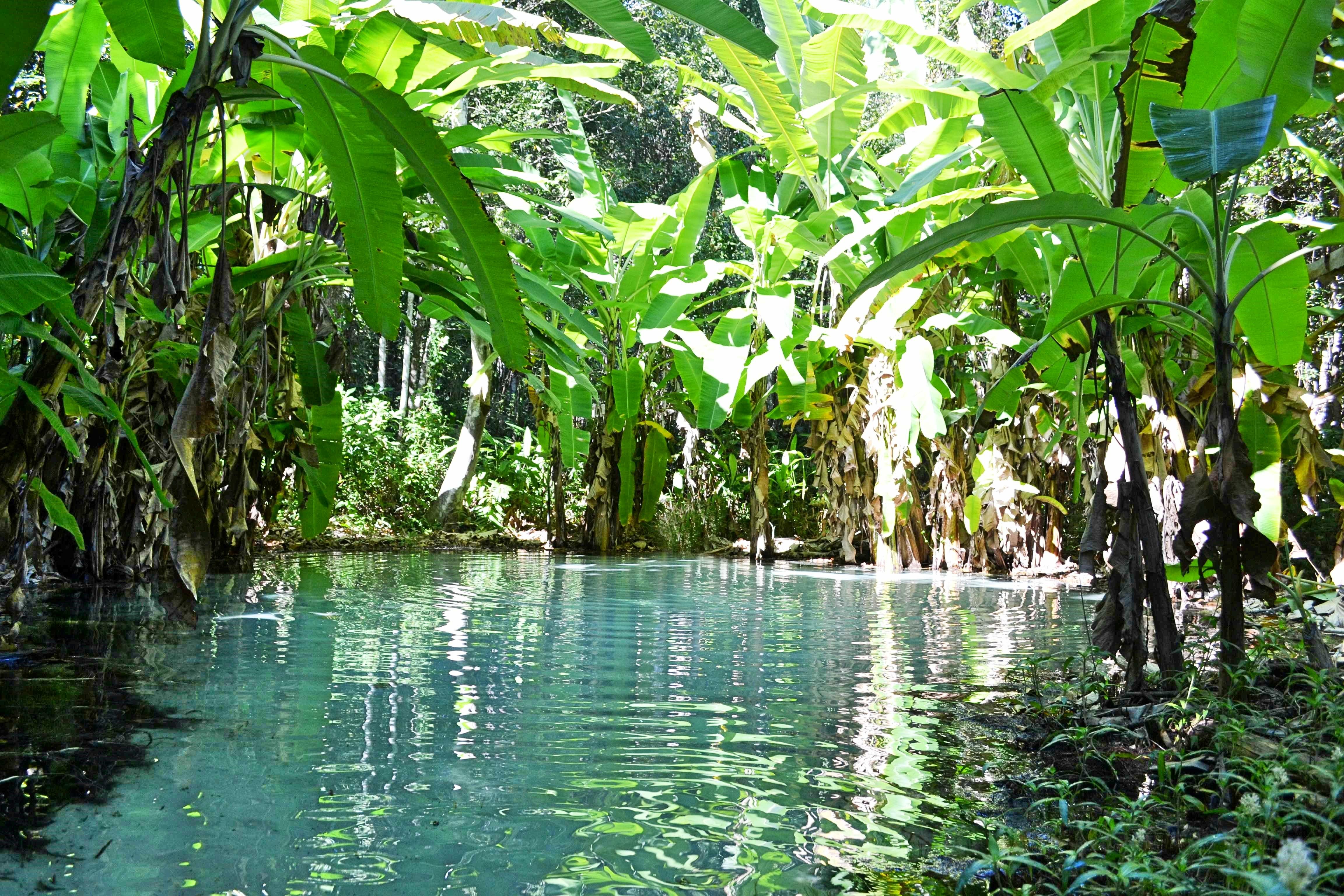 Sauvage au milieu des palmiers bananiers, un bassin d'eau turquoise transparente pour baignade de rêve