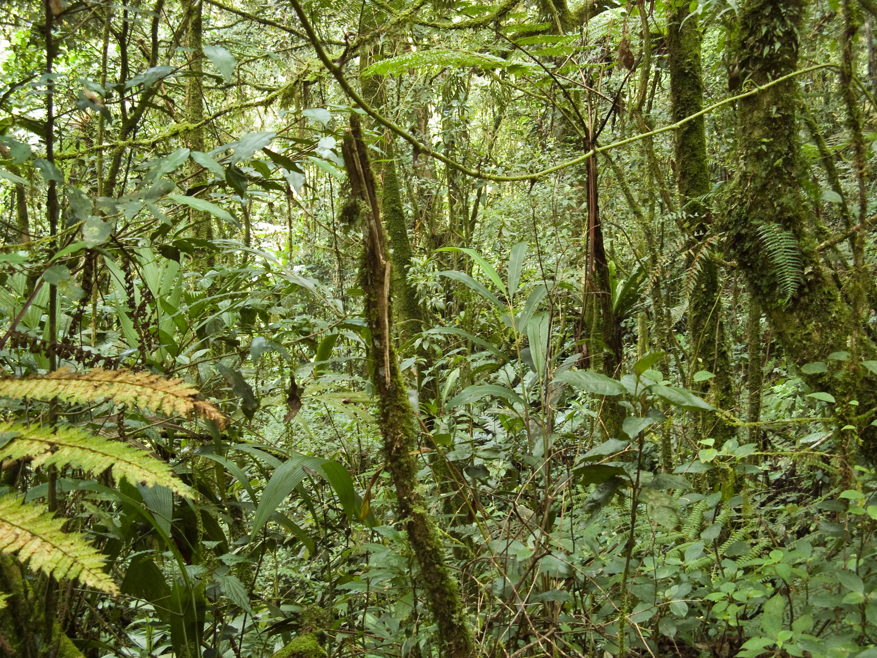Tropical Highland Forest Tropical Montane Forest at
