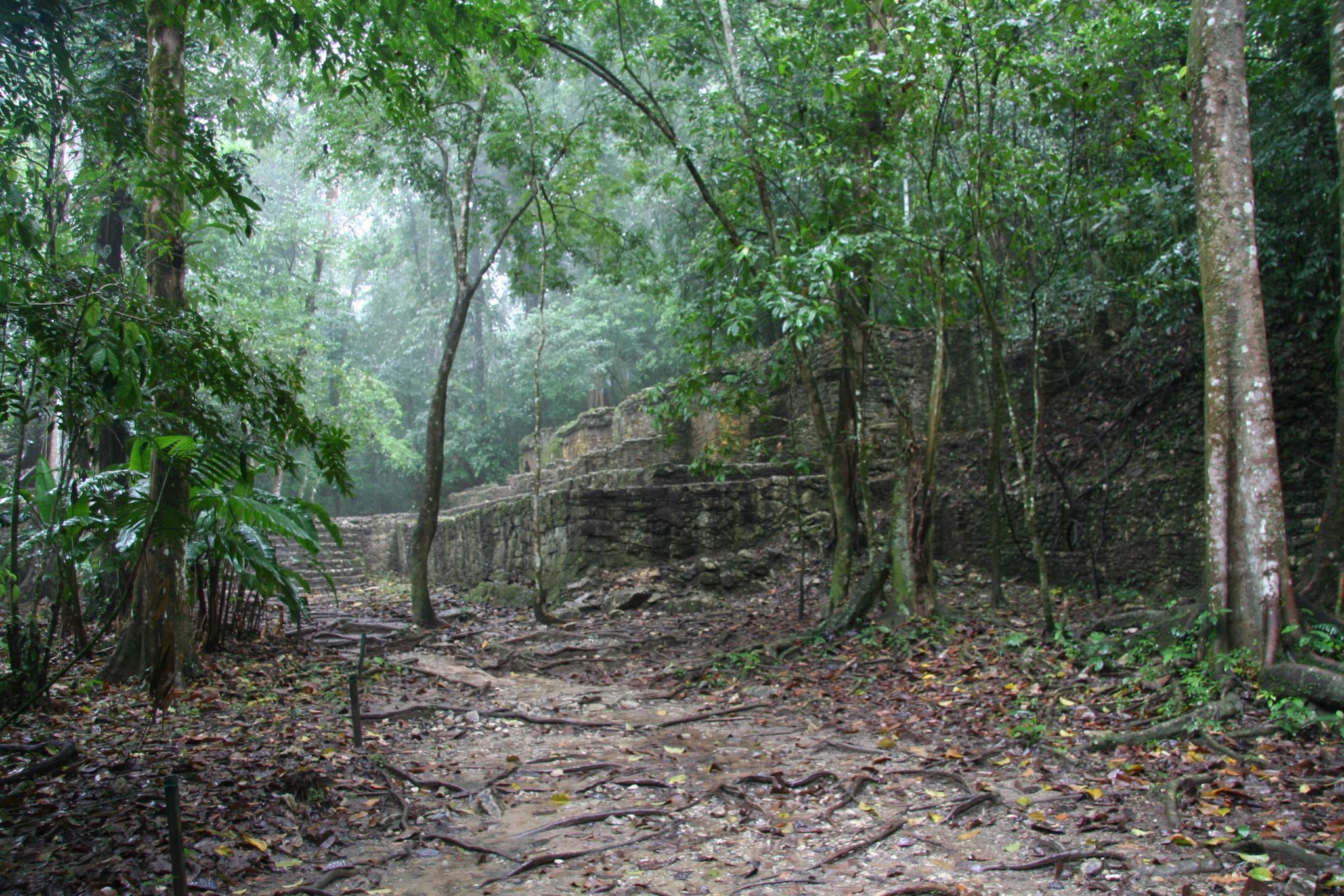 Mayan Ruins in Jungle