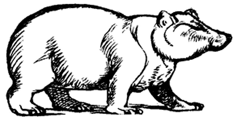 Lear 2 - Bear.jpg