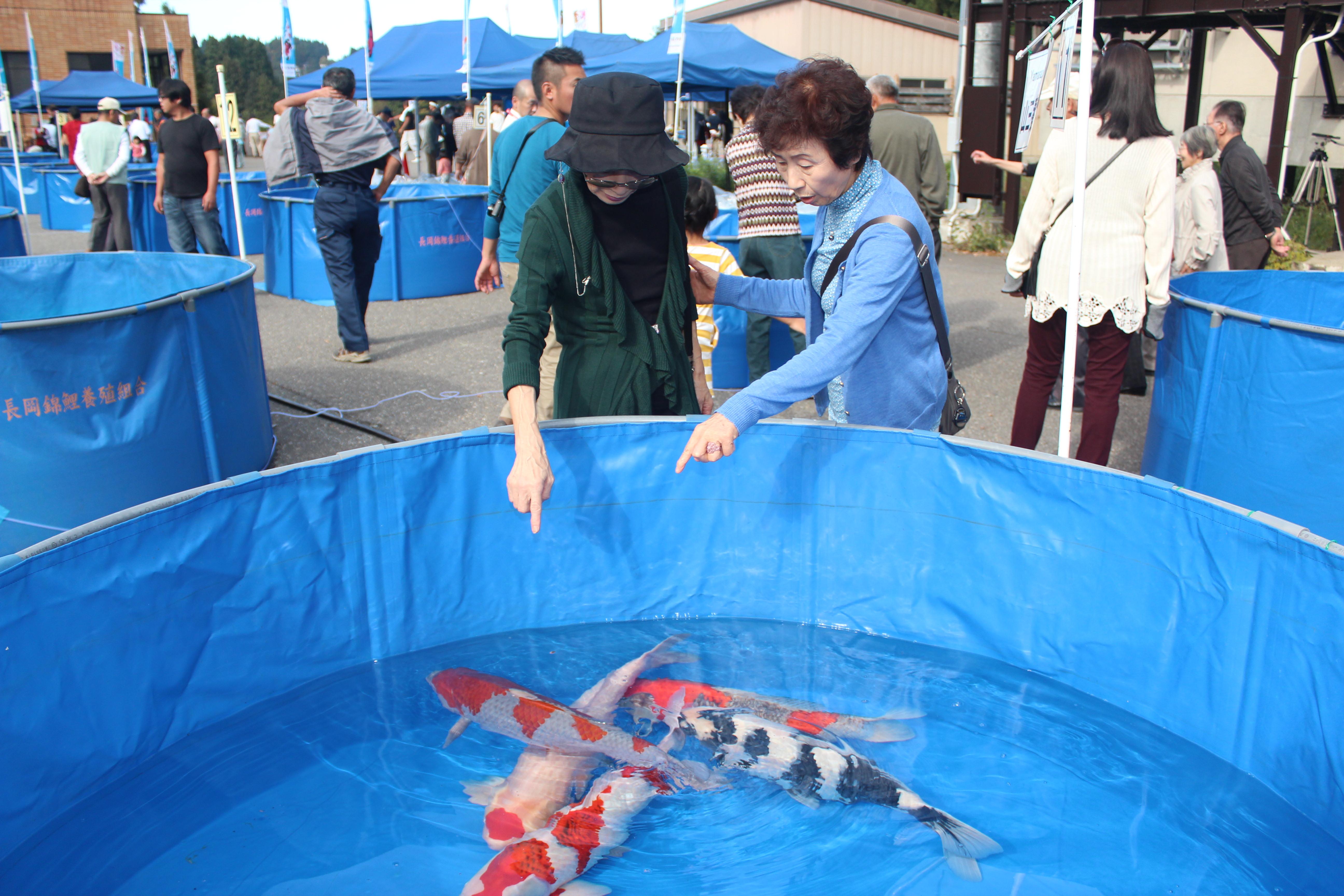 Nagaoka Koi Show 05.jpg